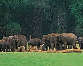 Alibaba. TRAFFIC push to reduce illegal wildlife trade online