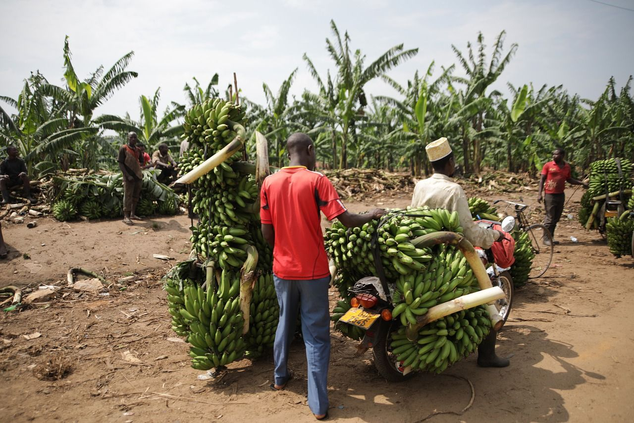 'Single window' payment gateway opens to boost African trade
